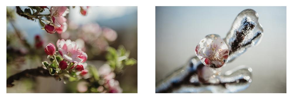 Imagen que contiene interior, pastel, flor, comida Descripción generada automáticamente